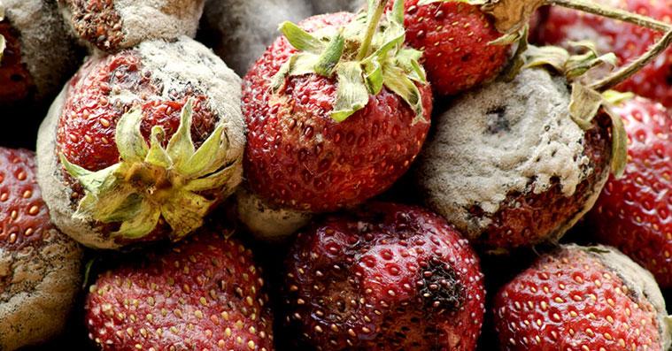 moldy-strawberries