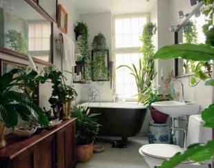 plants-for-bathroom_672_761_600